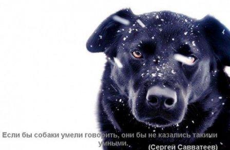 ѕервый снег