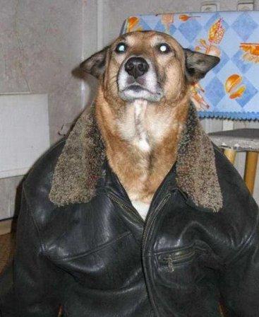 ¬ куртке теплее