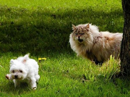 ўенок и лев-кот