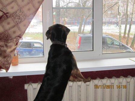 Ћюблю в окно смотреть!!!