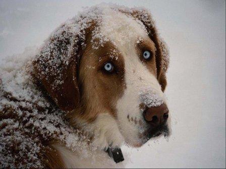 ¬есь в снегу