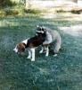 ≈нот плюс собачка равно любовь