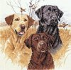 ќхотничьи собаки