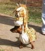 """""""акса в костюме жирафа"""