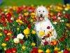 ¬ цветочном поле